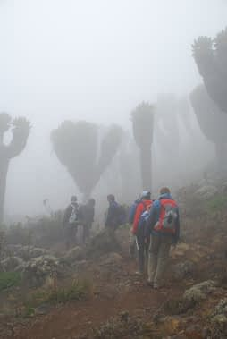 Machame Route day 3