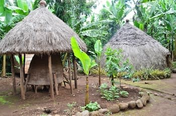 A traditional thatched Chagga home and shelter surrounded by banana bushes.